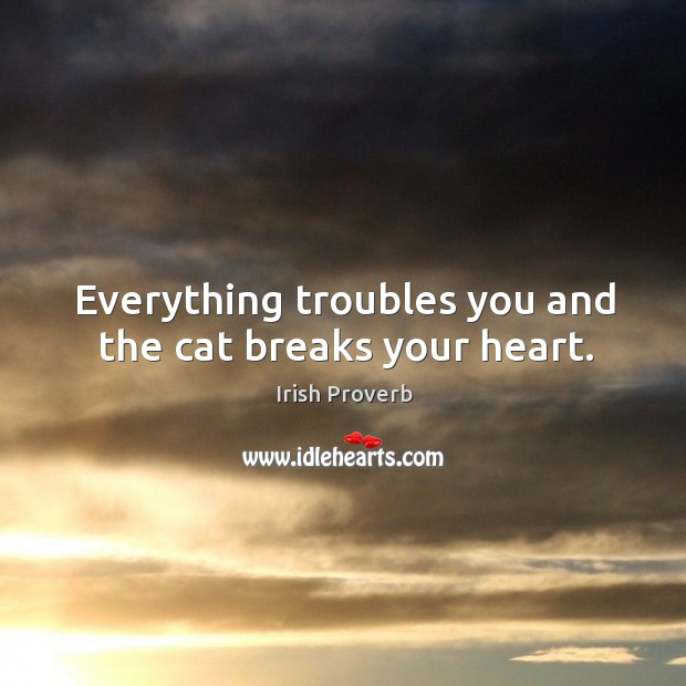 Everything troubles you and the cat breaks your heart. Irish Proverbs Image