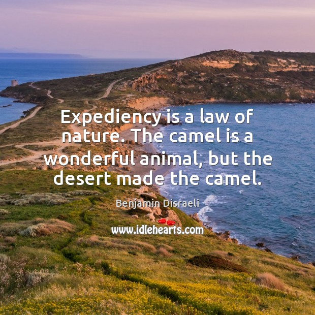 Expediency is a law of nature. The camel is a wonderful animal, Benjamin Disraeli Picture Quote