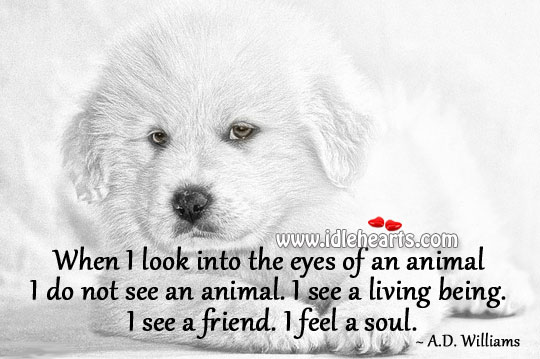 Image, When I look into the eyes of an animal