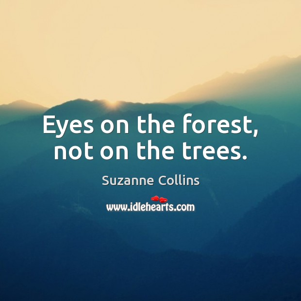 Eyes on the forest, not on the trees. Image