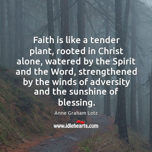 Image, Faith is like a tender plant, rooted in Christ alone, watered by