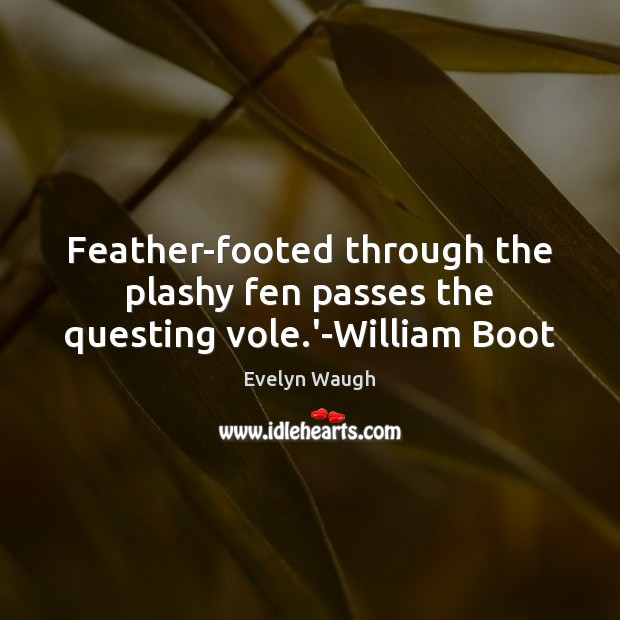 Feather-footed through the plashy fen passes the questing vole.'-William Boot Evelyn Waugh Picture Quote