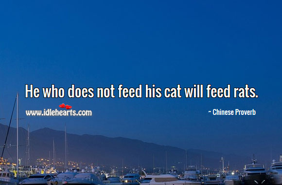 He Who Does Not Feed His Cat Will Feed Rats.