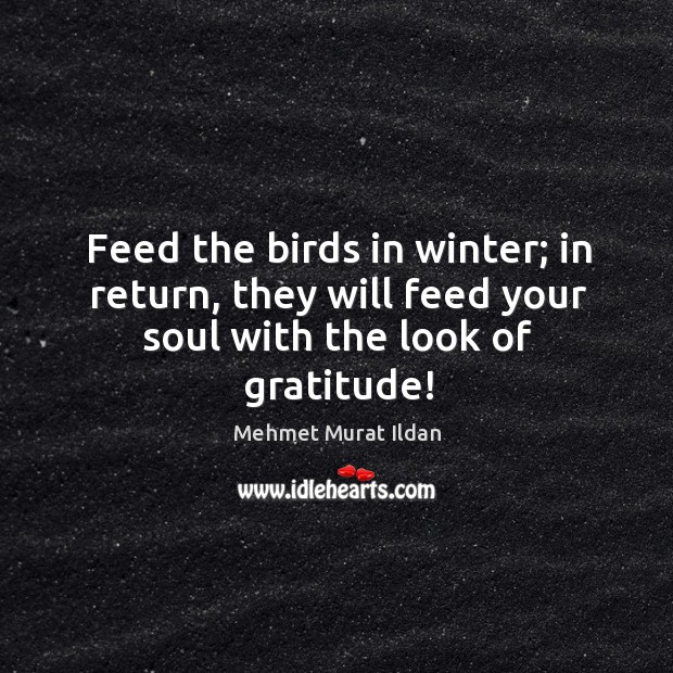 Feed the birds in winter; in return, they will feed your soul with the look of gratitude! Image