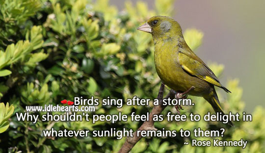Birds sing after a storm. Image
