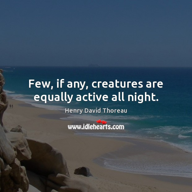 Few, if any, creatures are equally active all night. Image