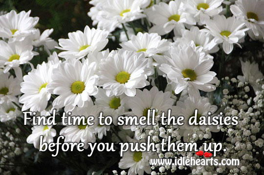 Find Time To Smell The Daisies