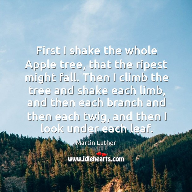 First I shake the whole apple tree, that the ripest might fall. Image