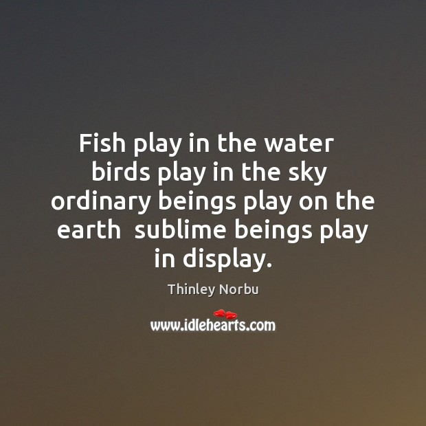 Fish play in the water   birds play in the sky  ordinary beings Image