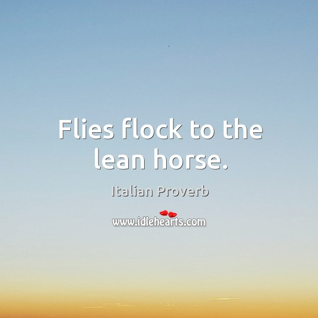 Image, Flies flock to the lean horse.