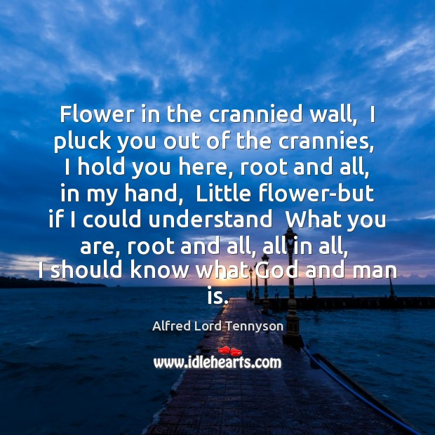 Image, Flower in the crannied wall,  I pluck you out of the crannies,