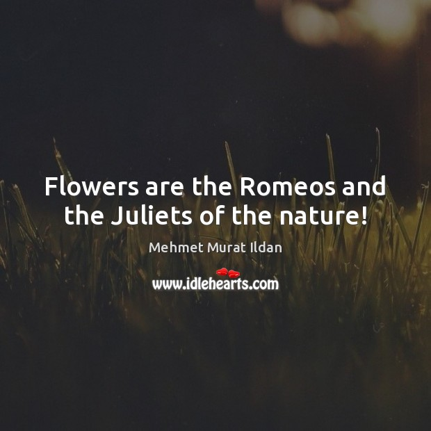 Image, Flowers are the Romeos and the Juliets of the nature!