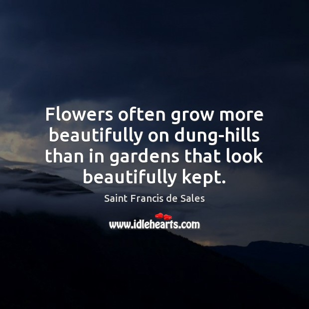 Flowers often grow more beautifully on dung-hills than in gardens that look Saint Francis de Sales Picture Quote