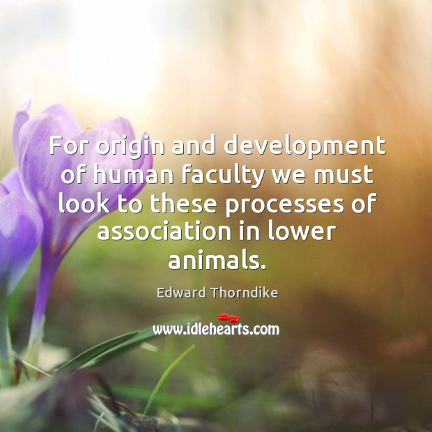 For origin and development of human faculty we must look to these processes of association in lower animals. Edward Thorndike Picture Quote