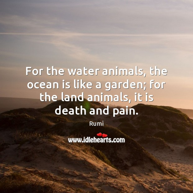 For the water animals, the ocean is like a garden; for the Image