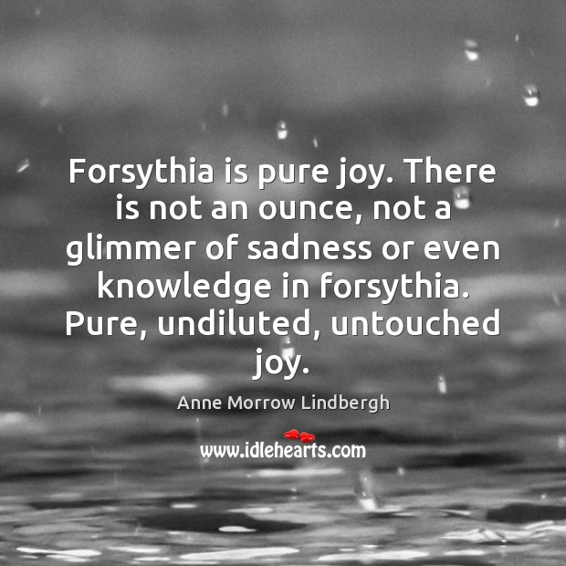 Forsythia is pure joy. There is not an ounce, not a glimmer Anne Morrow Lindbergh Picture Quote