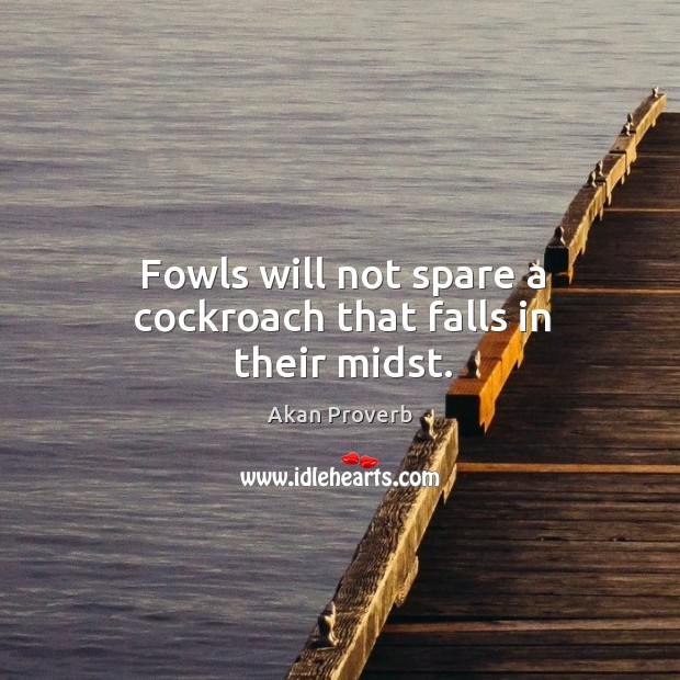 Fowls will not spare a cockroach that falls in their midst. Akan Proverbs Image