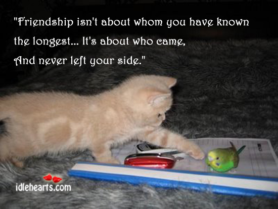 Image, Friendship isn't about whom you have known the longest.