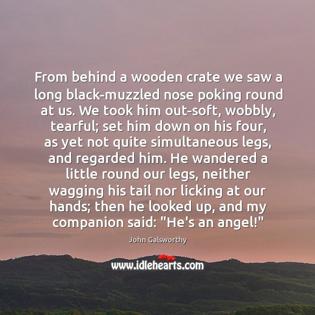 From behind a wooden crate we saw a long black-muzzled nose poking John Galsworthy Picture Quote
