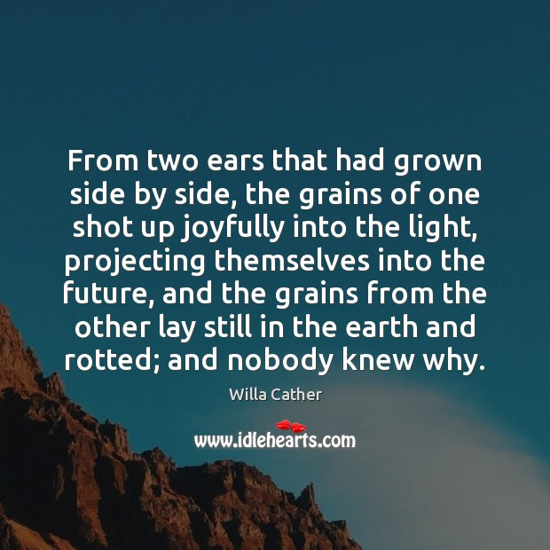 From two ears that had grown side by side, the grains of Image