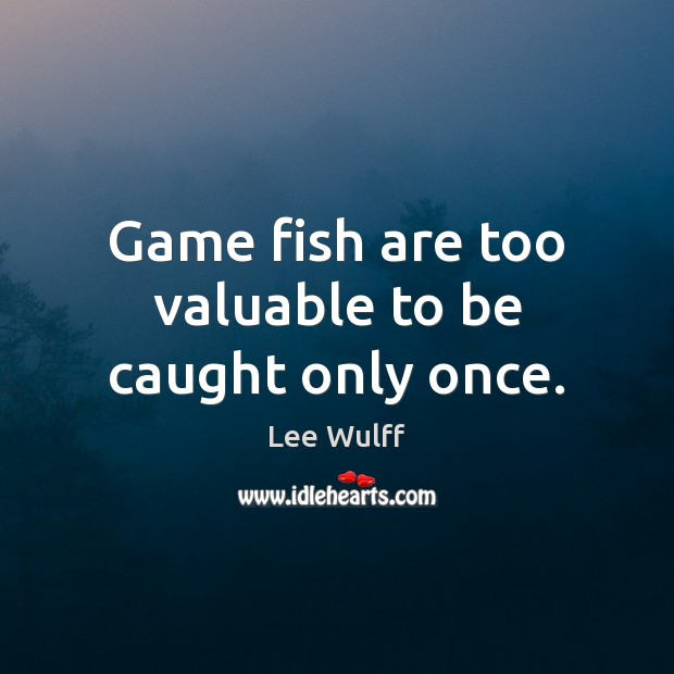 Game fish are too valuable to be caught only once. Image
