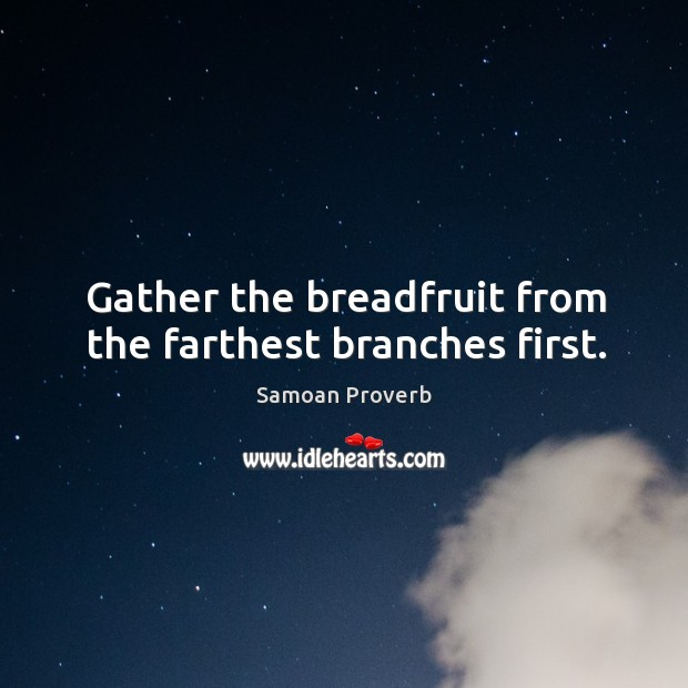 Gather the breadfruit from the farthest branches first. Samoan Proverbs Image