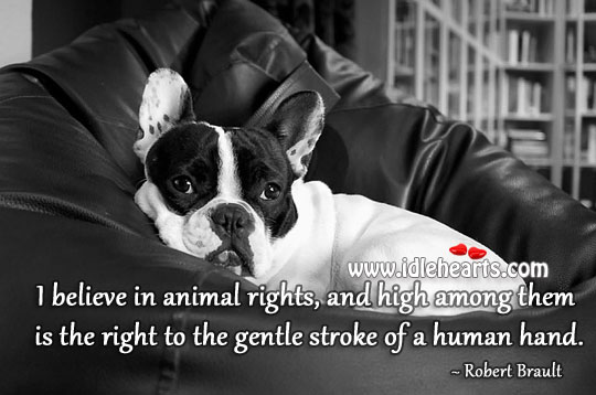 I Believe In Animal Rights