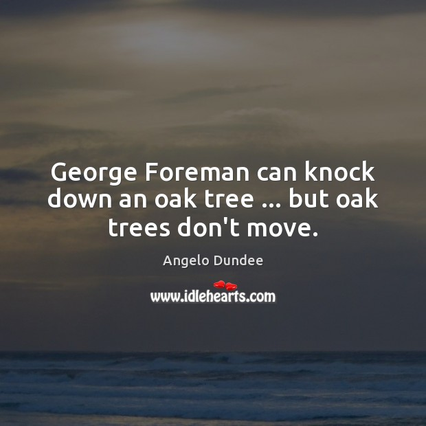 Image, George Foreman can knock down an oak tree … but oak trees don't move.
