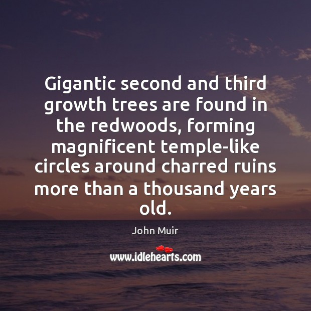 Picture Quote by John Muir