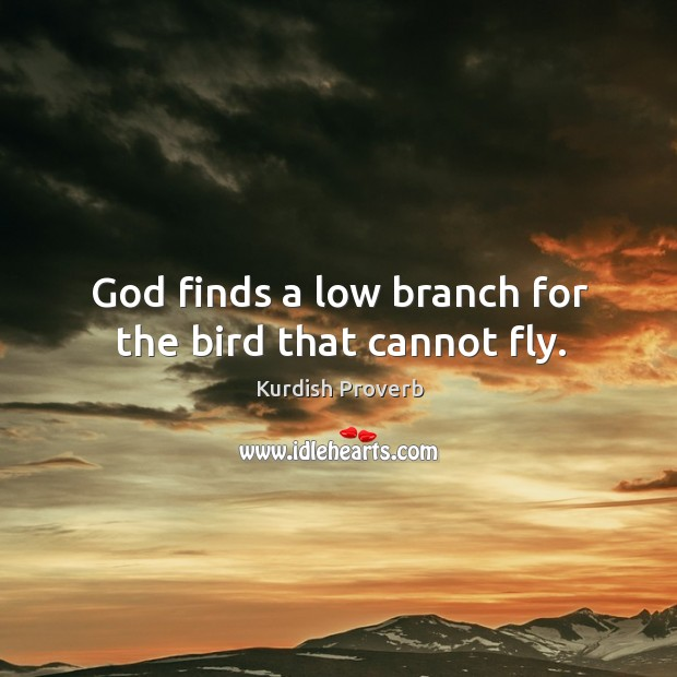 Image, God finds a low branch for the bird that cannot fly.