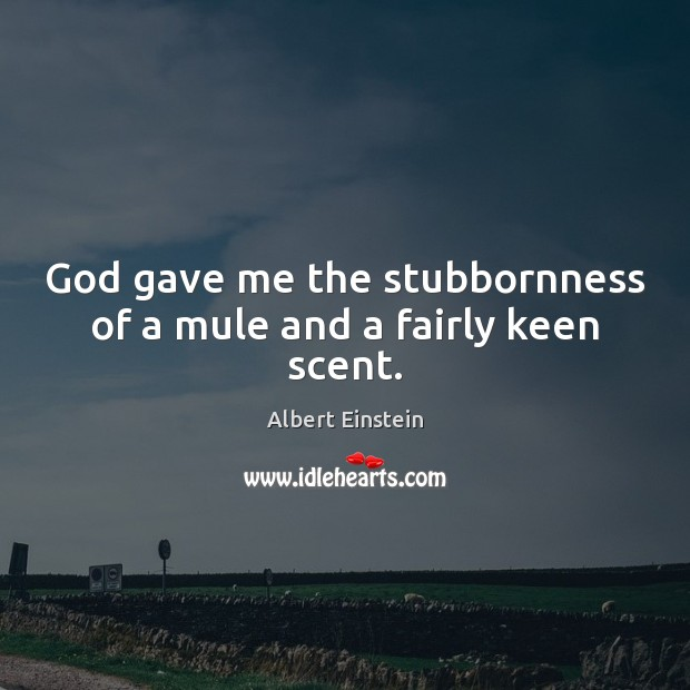 Image, God gave me the stubbornness of a mule and a fairly keen scent.