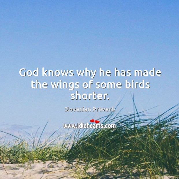 God knows why he has made the wings of some birds shorter. Slovenian Proverbs Image