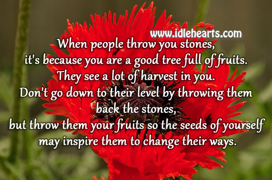 People throw stones at tree full of fruits Image