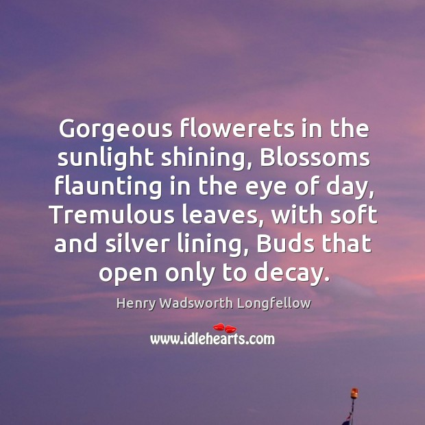 Image, Gorgeous flowerets in the sunlight shining, Blossoms flaunting in the eye of
