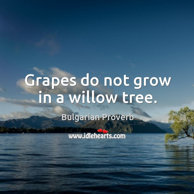 Grapes do not grow in a willow tree. Bulgarian Proverbs Image