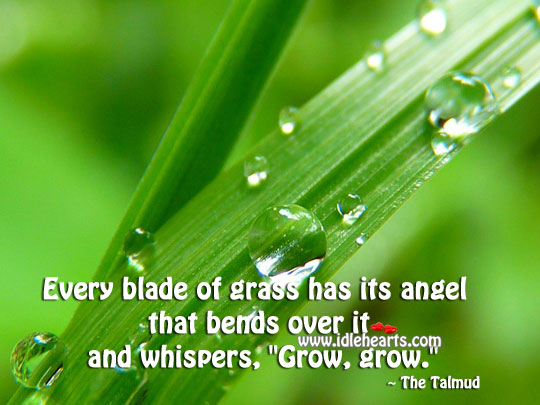 Image, Every blade of grass has its angel.