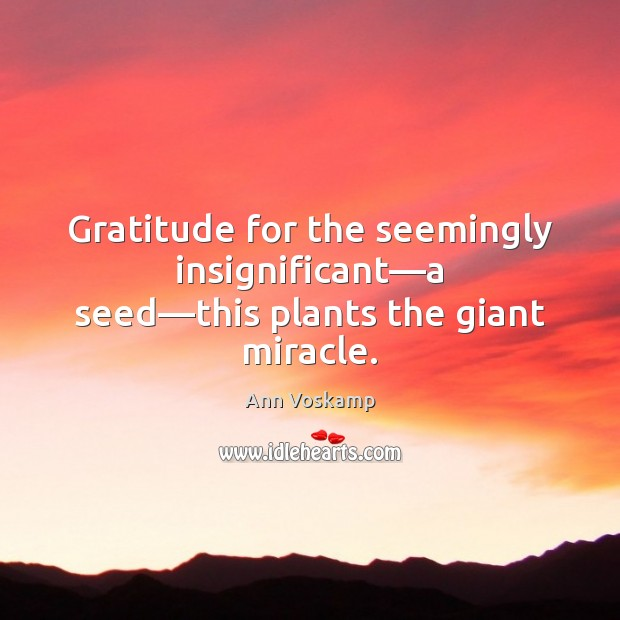 Image, Gratitude for the seemingly insignificant—a seed—this plants the giant miracle.