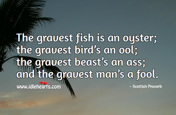 The gravest man is a fool. Scottish Proverbs Image