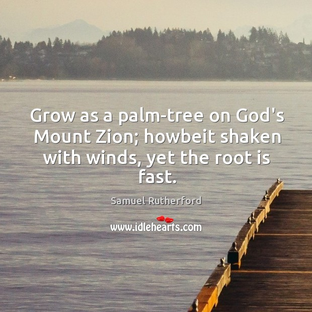 Grow as a palm-tree on God's Mount Zion; howbeit shaken with winds, yet the root is fast. Image