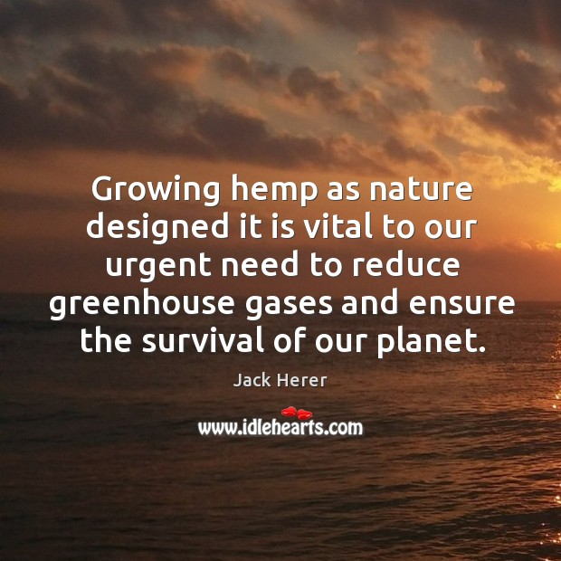 Growing hemp as nature designed it is vital to our urgent need to reduce Jack Herer Picture Quote