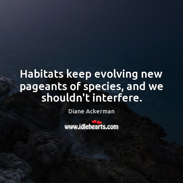 Habitats keep evolving new pageants of species, and we shouldn't interfere. Image