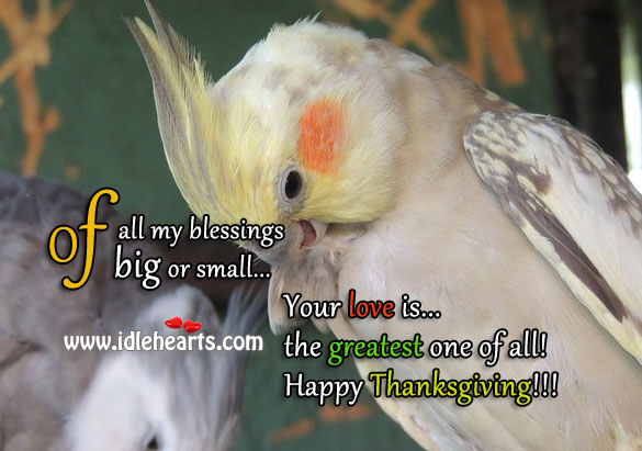 Image, Happy thanksgiving!