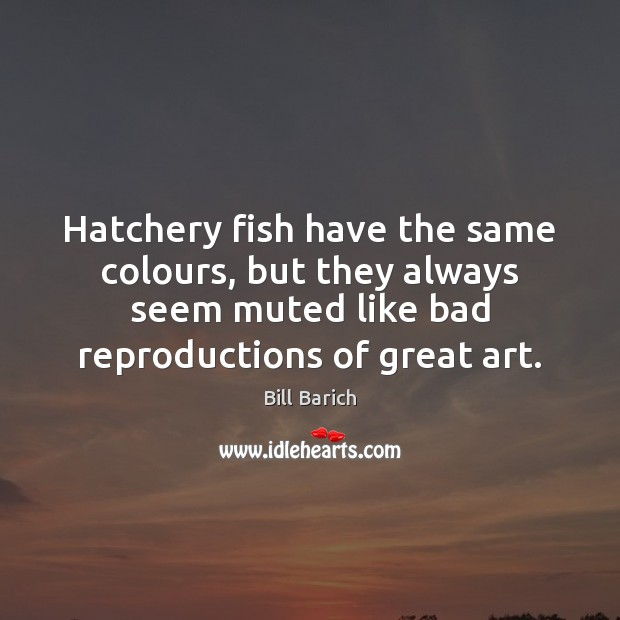 Image, Hatchery fish have the same colours, but they always seem muted like