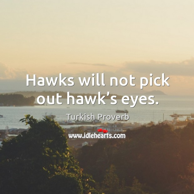 Image, Hawks will not pick out hawk's eyes.