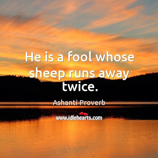 He is a fool whose sheep runs away twice. Ashanti Proverbs Image