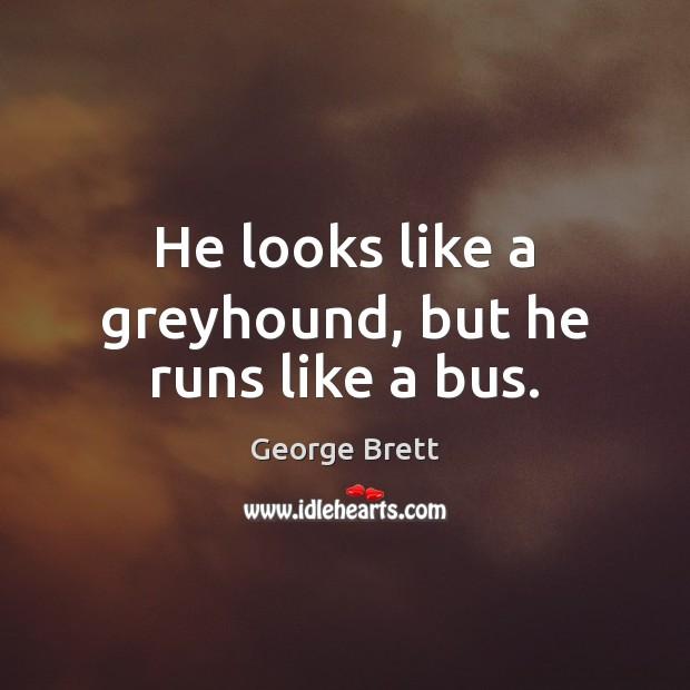 He looks like a greyhound, but he runs like a bus. Image