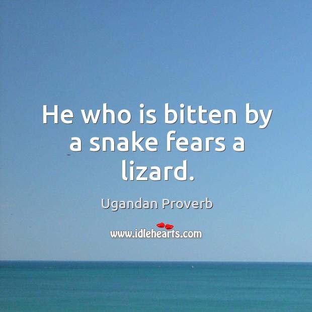 He who is bitten by a snake fears a lizard. Ugandan Proverbs Image