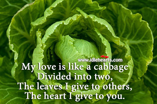 Image, My love is like a cabbage