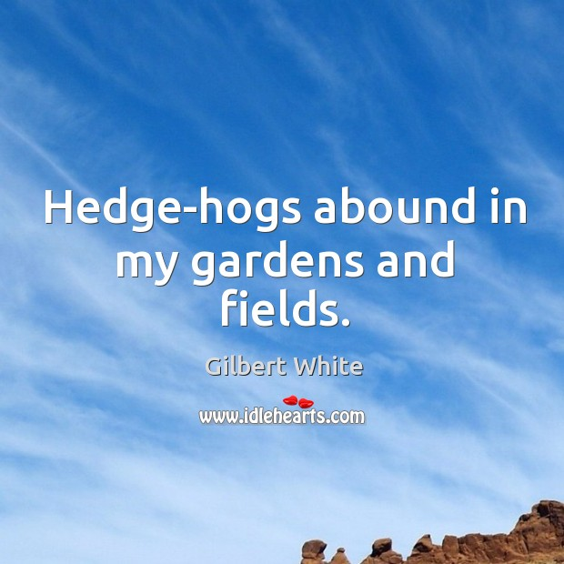 Hedge-hogs abound in my gardens and fields. Image