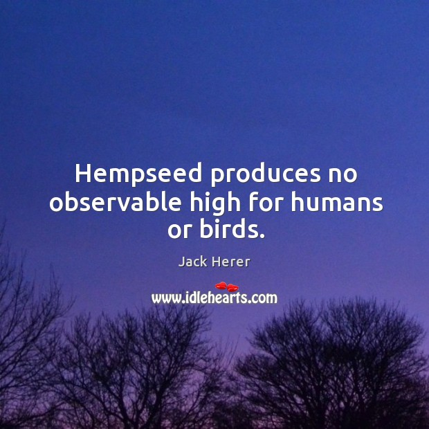 Hempseed produces no observable high for humans or birds. Jack Herer Picture Quote